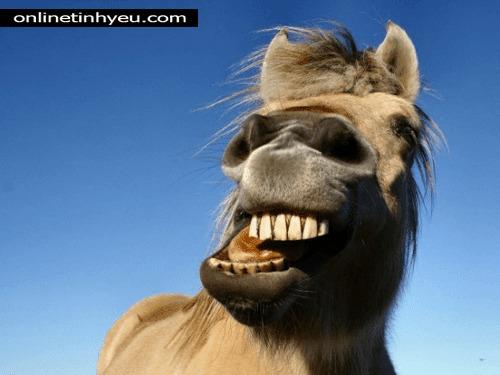Con ngựa ông gọi tối qua