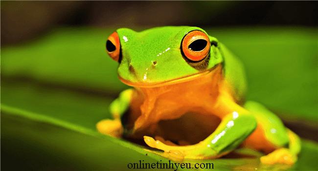 Bài học từ câu chuyện về con ếch