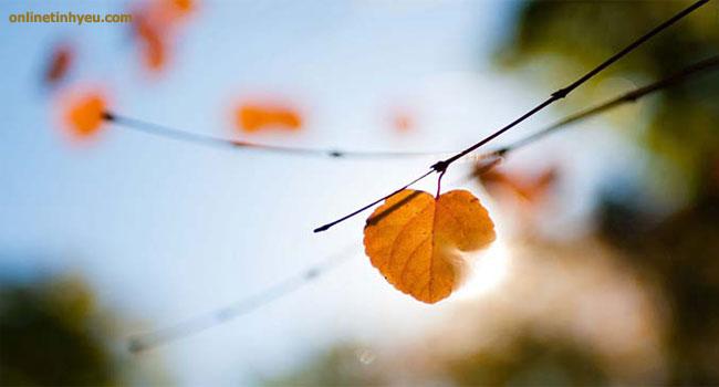 Tản mạn cuối năm về câu chuyện chiếc lá và gió