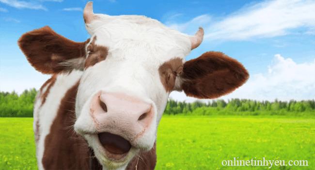 Nguyên nhân gây bệnh bò điên