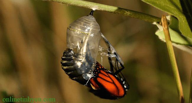 Cái kén bướm