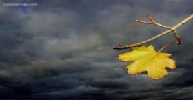 Sóng gió cuộc đời