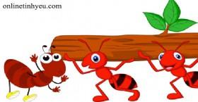 Bài học về loài kiến