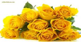Hoa hồng cho mùa xuân