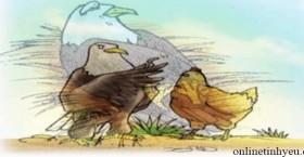 Đại bàng và Gà