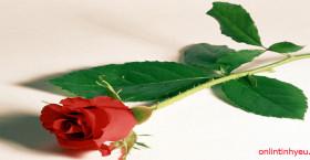 Câu chuyện hoa hồng và cái gai