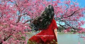 Mùa xuân của Xuyến