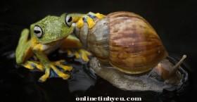 Ốc sên và ếch